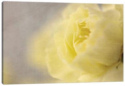Rose Whisper II Canvas Art Print