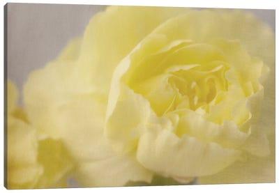 Rose Whisper III Canvas Art Print
