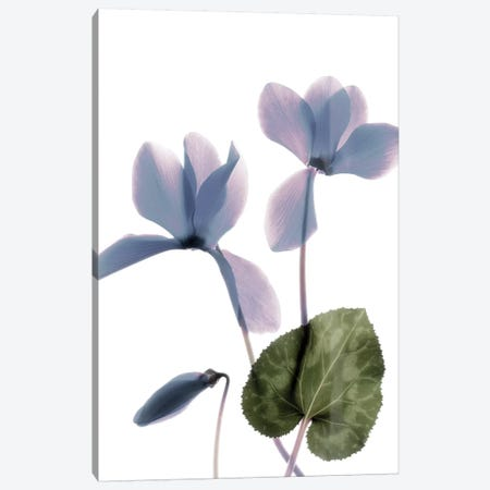 X-Ray Cyclamen 3-Piece Canvas #STL24} by Judy Stalus Canvas Art