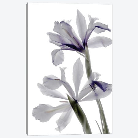 X-Ray Iris Canvas Print #STL25} by Judy Stalus Canvas Artwork