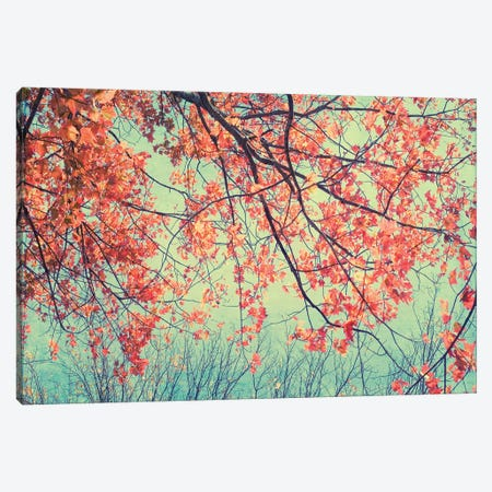Autumn Tapestry II Canvas Print #STL2} by Judy Stalus Canvas Wall Art
