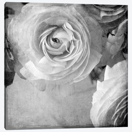 Dark Ranunculus IV 3-Piece Canvas #STL38} by Judy Stalus Canvas Artwork
