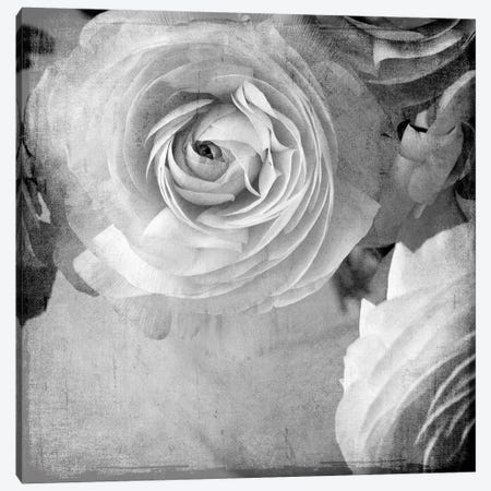 Dark Ranunculus IV Canvas Print #STL38} by Judy Stalus Canvas Artwork
