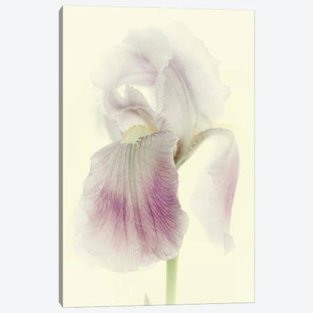Flowers Aglow I Canvas Print #STL43} by Judy Stalus Art Print