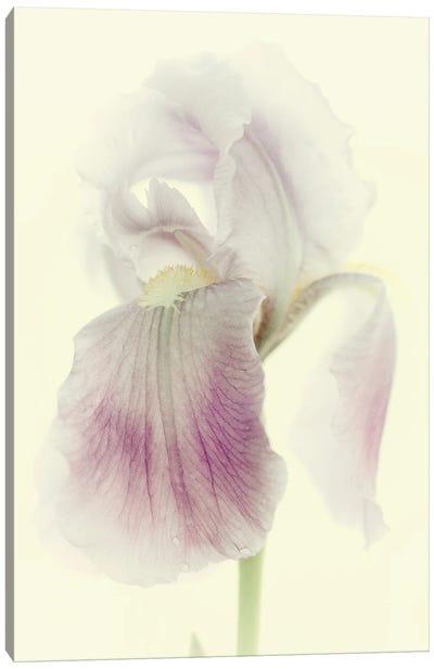 Flowers Aglow I Canvas Art Print