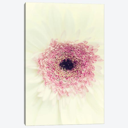 Flowers Aglow II Canvas Print #STL44} by Judy Stalus Canvas Wall Art
