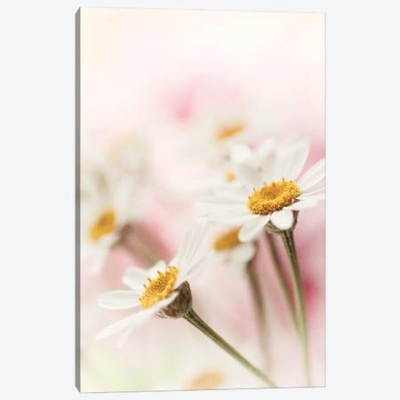 Flowers Aglow III Canvas Print #STL45} by Judy Stalus Canvas Art