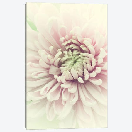 Flowers Aglow IV Canvas Print #STL46} by Judy Stalus Canvas Wall Art