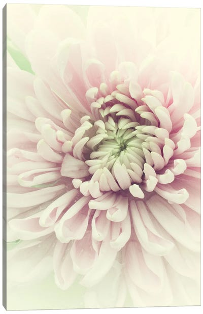 Flowers Aglow IV Canvas Art Print