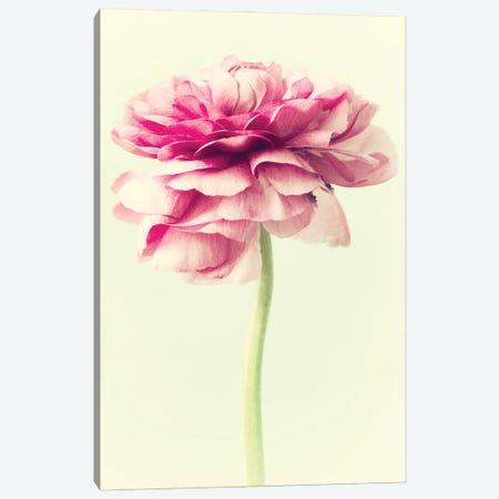 Lush Botanical I Canvas Print #STL48} by Judy Stalus Art Print