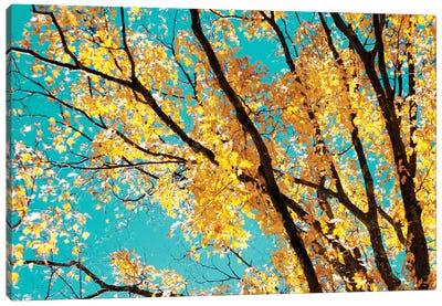 Autumn Tapestry IV Canvas Art Print