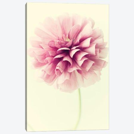 Lush Botanical III Canvas Print #STL50} by Judy Stalus Canvas Artwork