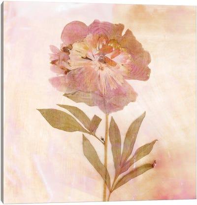 Remembered Flowers II Canvas Art Print