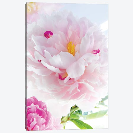 Perfect Peony Canvas Print #STL58} by Judy Stalus Canvas Artwork