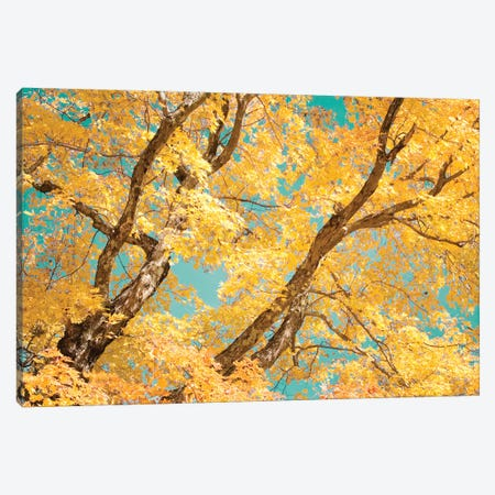 Autumn Tapestry V Canvas Print #STL5} by Judy Stalus Canvas Art Print