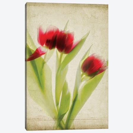 Parchment Flowers I Canvas Print #STL7} by Judy Stalus Art Print