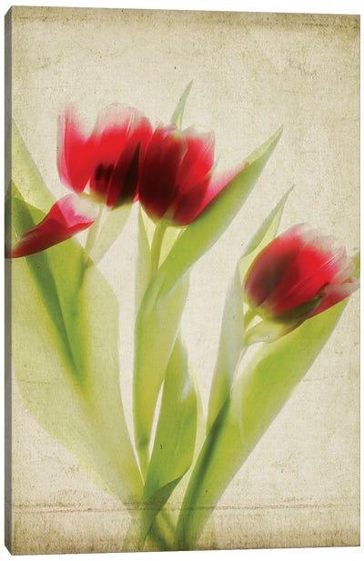 Parchment Flowers I Canvas Art Print
