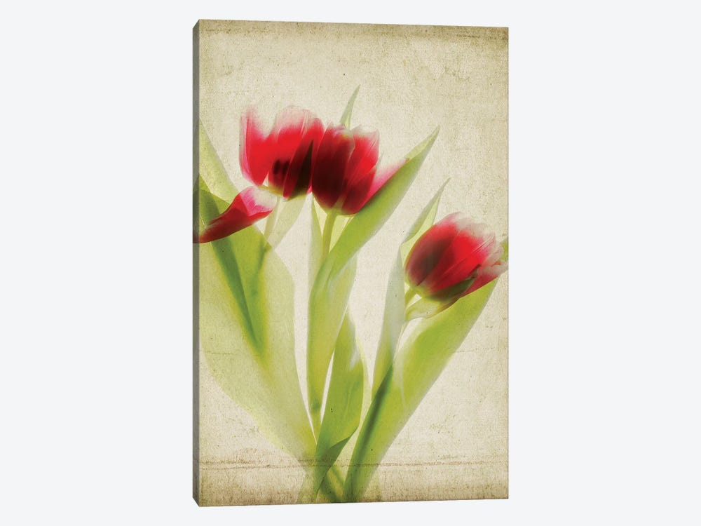 Parchment Flowers I by Judy Stalus 1-piece Canvas Wall Art
