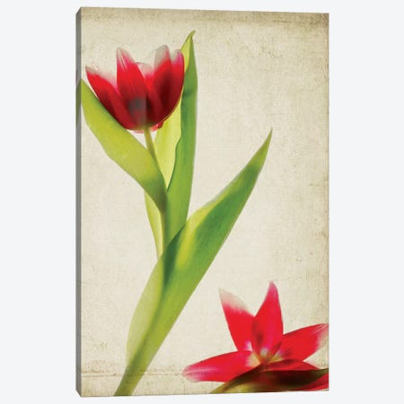 Parchment Flowers II Canvas Print #STL8} by Judy Stalus Canvas Art