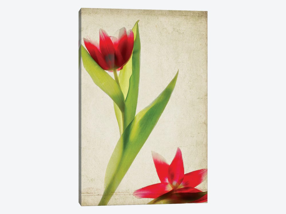 Parchment Flowers II by Judy Stalus 1-piece Canvas Art Print