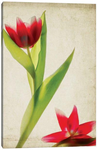 Parchment Flowers II Canvas Art Print