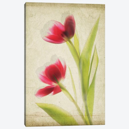 Parchment Flowers III Canvas Print #STL9} by Judy Stalus Canvas Art