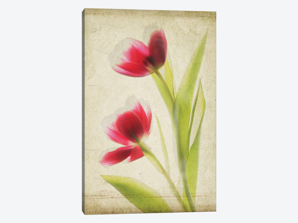 Parchment Flowers III by Judy Stalus 1-piece Canvas Artwork