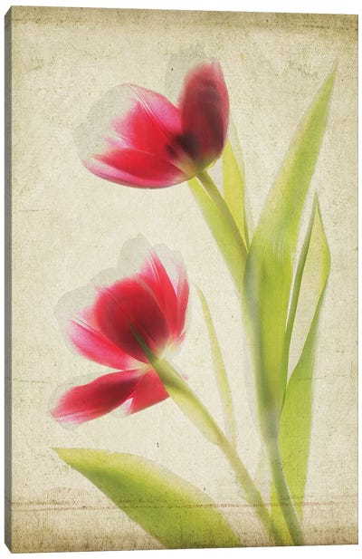 Parchment Flowers III Canvas Art Print