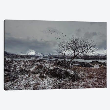 Lofoten Gray II Canvas Print #STR129} by Andreas Stridsberg Canvas Art Print