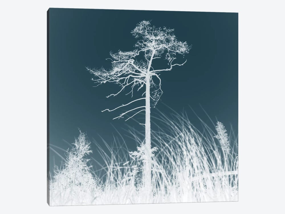 Weathered Trees I by Andreas Stridsberg 1-piece Canvas Art