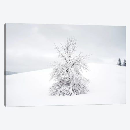 White Tree Canvas Print #STR157} by Andreas Stridsberg Canvas Art Print