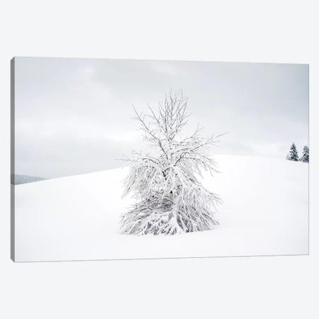 White Tree Canvas Print #STR157} by Andreas Stridsberg Canvas Art Print