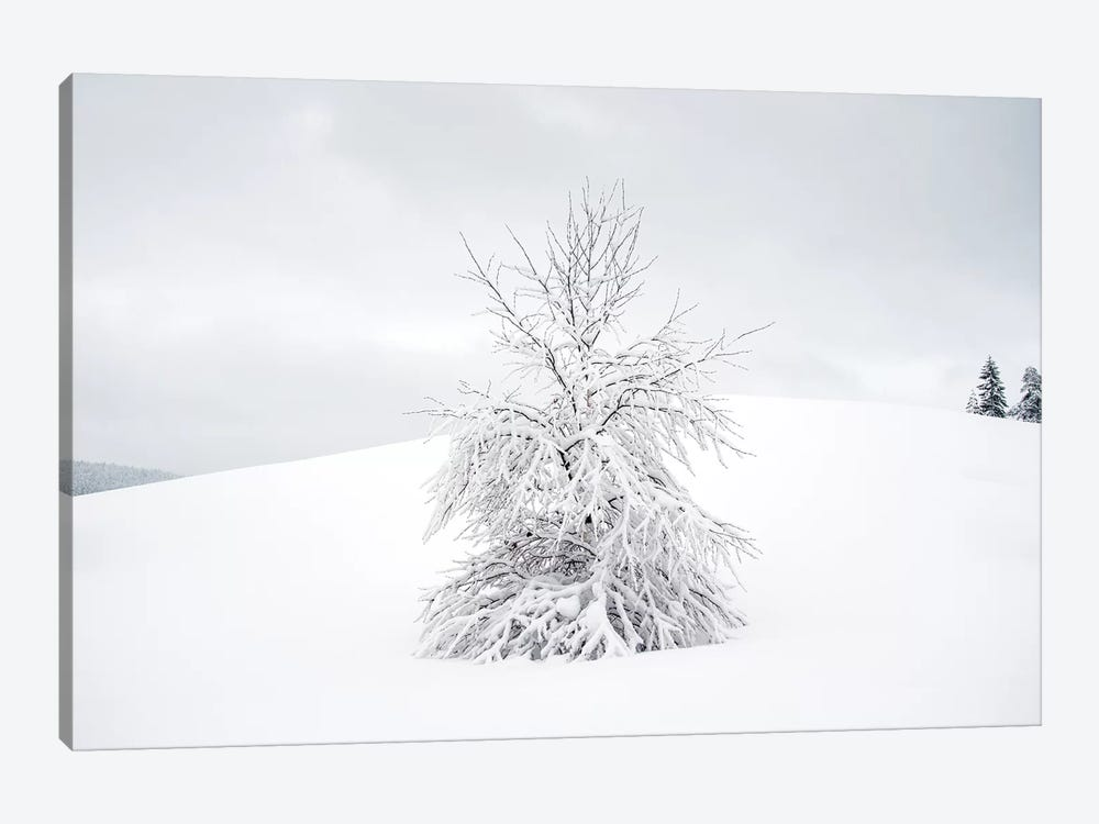 White Tree by Andreas Stridsberg 1-piece Canvas Artwork