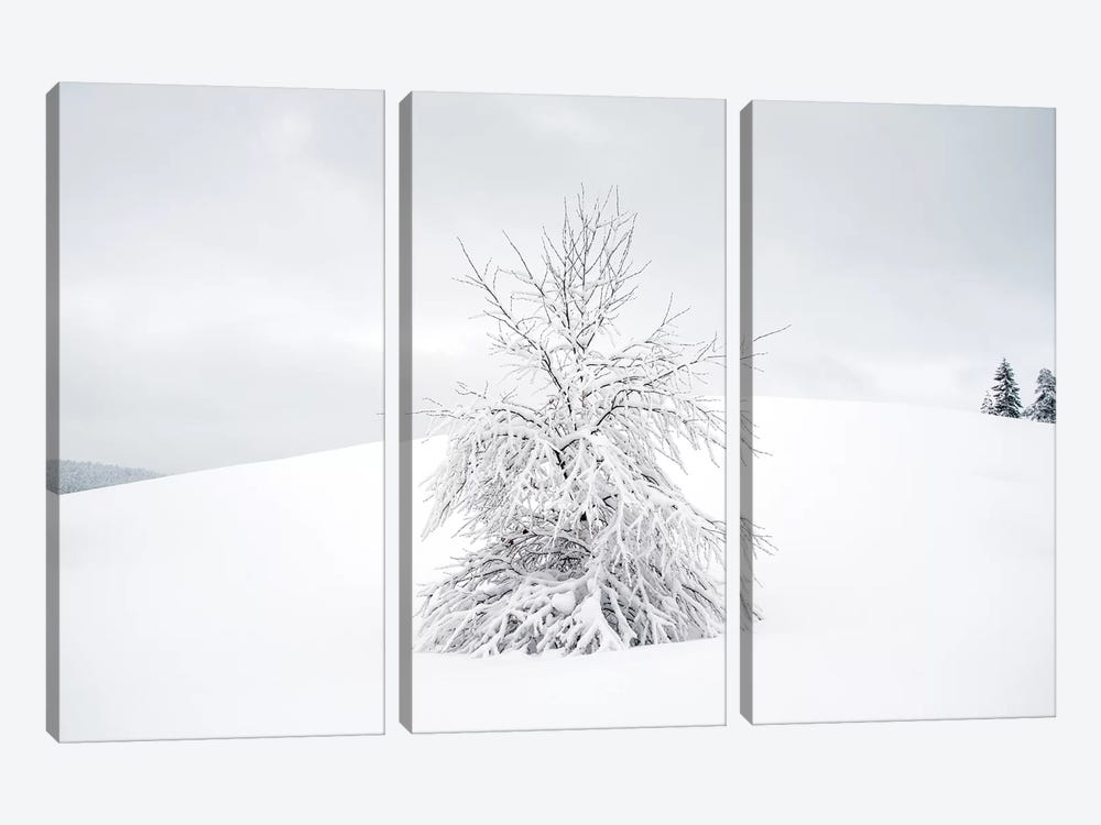 White Tree by Andreas Stridsberg 3-piece Canvas Artwork