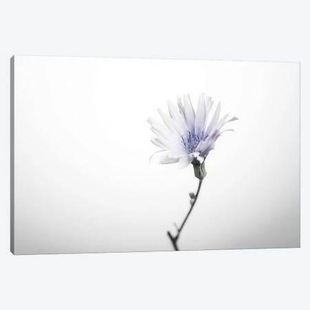 Floral I Canvas Print #STR160} by Andreas Stridsberg Canvas Print