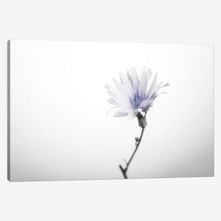 Floral I Canvas Print #STR160} by Andreas Stridsberg Canvas Print