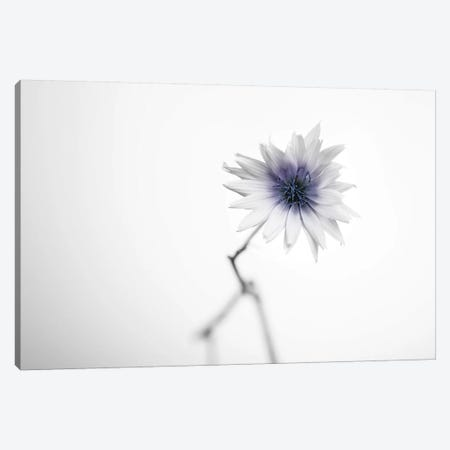 Floral II Canvas Print #STR161} by Andreas Stridsberg Canvas Print