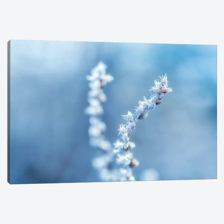 Cold And Sharp Canvas Print #STR173} by Andreas Stridsberg Canvas Artwork