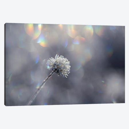 Fluffy Ice Canvas Print #STR179} by Andreas Stridsberg Canvas Wall Art
