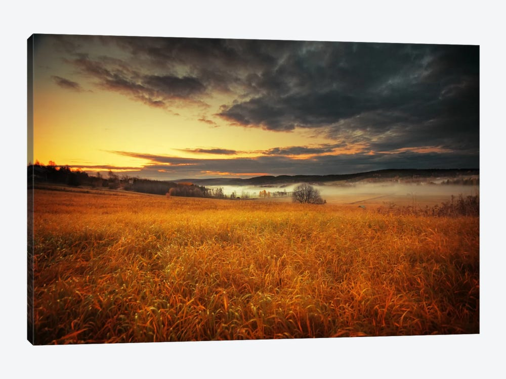 Fields Of Gold by Andreas Stridsberg 1-piece Canvas Wall Art