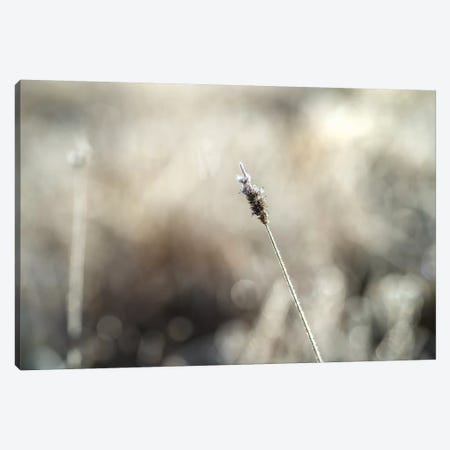Frosty Straw Canvas Print #STR180} by Andreas Stridsberg Canvas Art Print