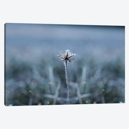 Frozen Star Canvas Print #STR181} by Andreas Stridsberg Canvas Art Print
