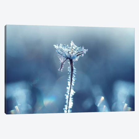 Ice Crown Canvas Print #STR184} by Andreas Stridsberg Canvas Wall Art