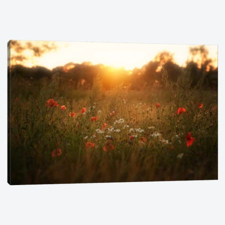 Fields Of Red Canvas Print #STR18} by Andreas Stridsberg Canvas Art