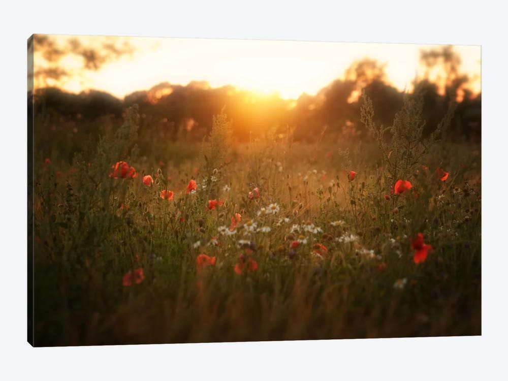 Fields Of Red by Andreas Stridsberg 1-piece Canvas Art Print