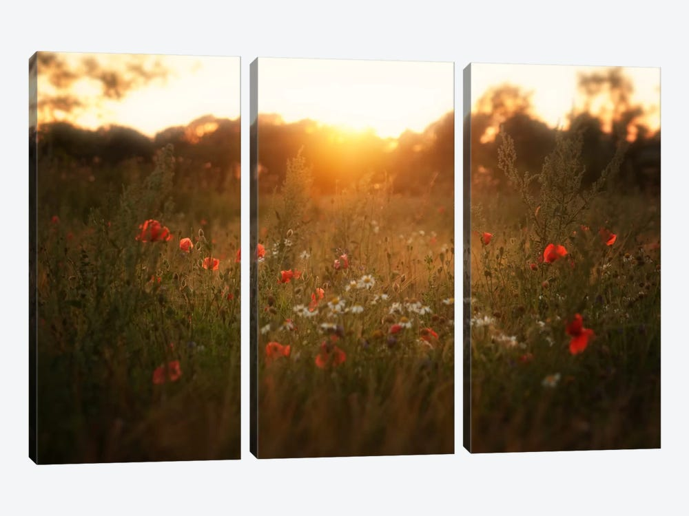 Fields Of Red by Andreas Stridsberg 3-piece Canvas Art Print