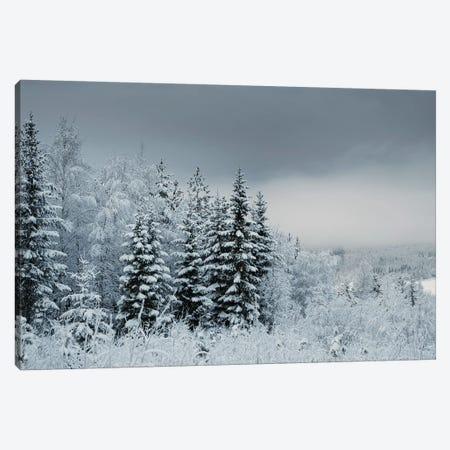 Snowy Sweden Canvas Print #STR197} by Andreas Stridsberg Canvas Print