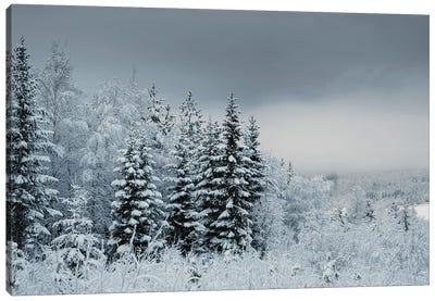 Snowy Sweden Canvas Art Print