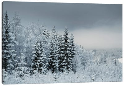 Snowy Sweden Canvas Art Print
