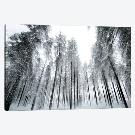 Trees In Motion Canvas Print #STR200} by Andreas Stridsberg Canvas Art